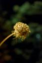 Macrofotografía - Flor